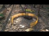 Кладбище домашних животных на Северо-Востоке Москвы